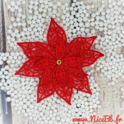 Poinsetia Etoile de Noël
